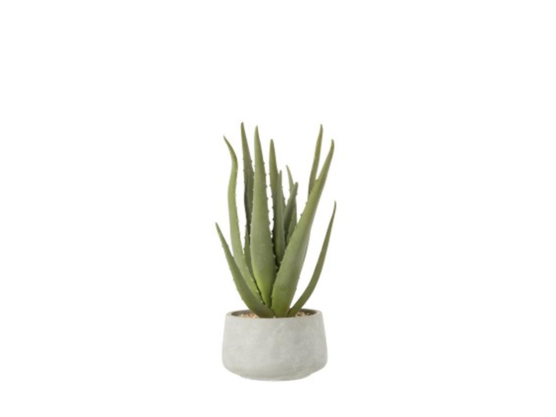 Φυτά Αποξηραμένα 1