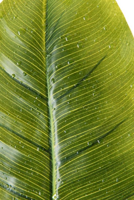 Banana Leaf 40288