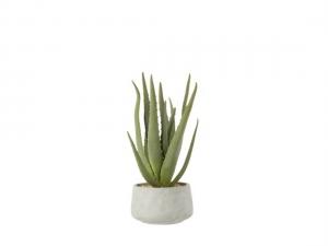 Φυτά Αποξηραμένα