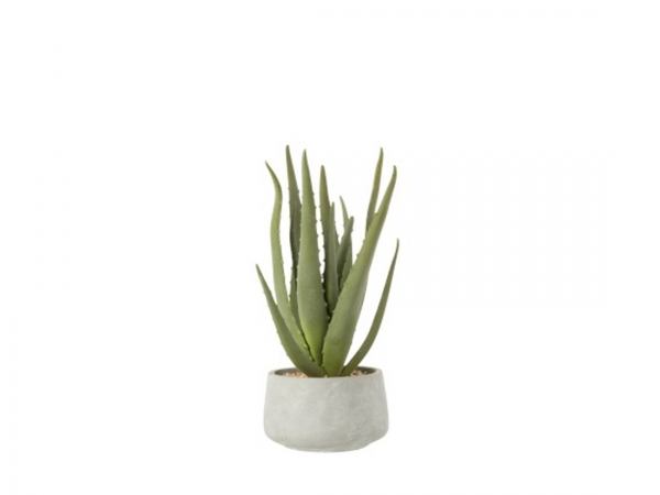 Aloe Pot 4109