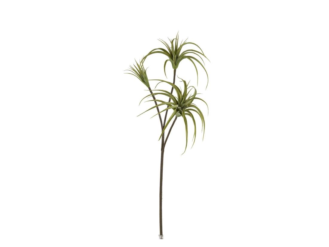 Branch Tillandsia 93064